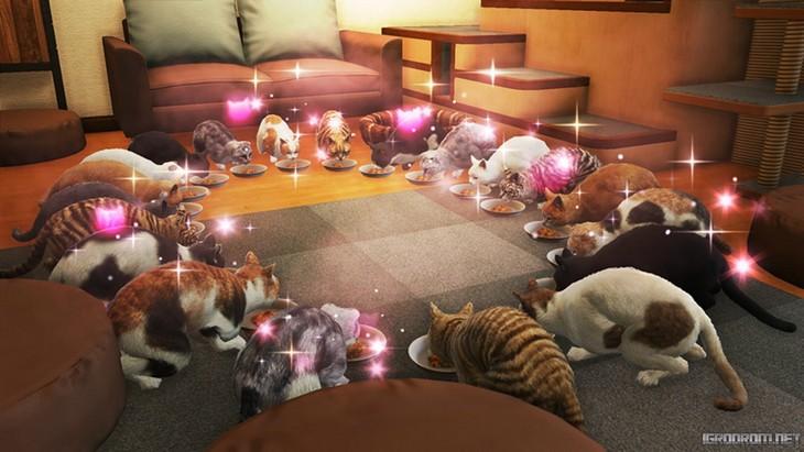 Поиск котов для кафе